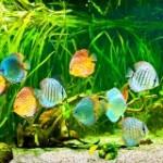 aquarium richtig reinigen