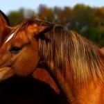 Ratgeber Pferdehaltung