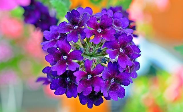 Die Schönsten Hängepflanzen Für Den Balkon