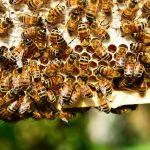 Bild: Bienen