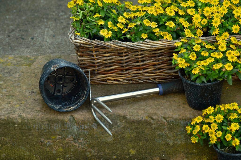 Bild Blumen pflanzen